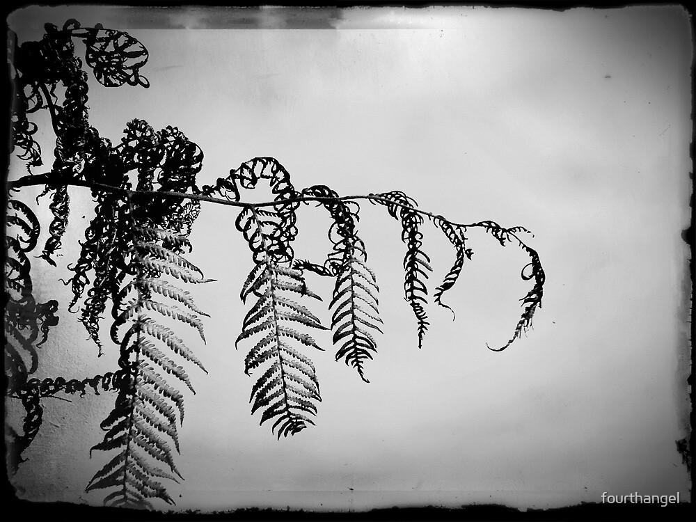 The fern's slow death in B&W by fourthangel