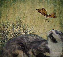 Melody cat and Butterfly by Stephanie Reynolds