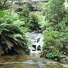 Leura Cascades and Chelmsford Bridge by Michael John