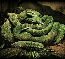 SNAKES ALIVE!!! by Chris Lord