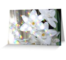 Paperwhite Perfection Greeting Card