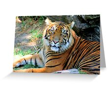 Tiger At Rest - 2009 Greeting Card