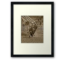 A Rodeo Cowboy Riding His Bull Framed Print