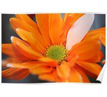 Orange Flower, backyard Poster