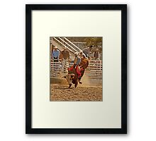 Rodeo Cowboy Riding a Bull Framed Print
