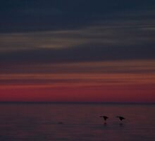 Two Birds with One Sunset by Raymond Holt