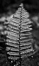 Silver Fern by Odille Esmonde-Morgan