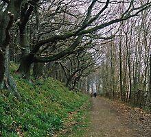 Walking in Lindley Wood by WatscapePhoto