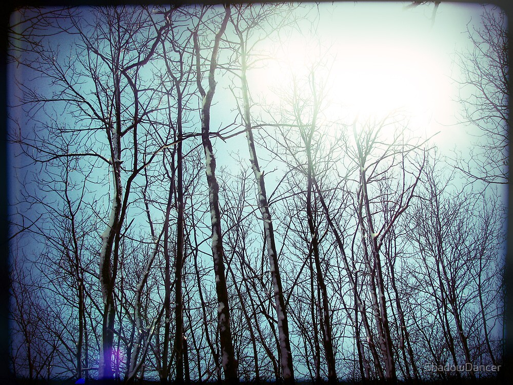 a whispered love story floating in the tops of the trees fingertips by ShadowDancer