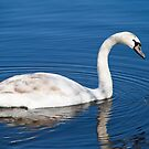 No Ugly Duckling by twinnieE