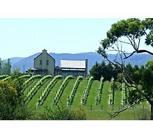 Yarra Valley Vineyard Photographic Print
