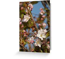 Prunus Amanogawa Greeting Card