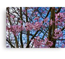 Cherry Blossom  (Spring) Canvas Print