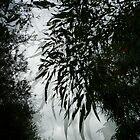 Botany Bay Angophora leaves by Howard Gwynne