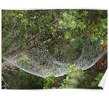 Spider Hammock Poster