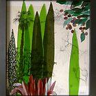 Doreanthes and Syzygium by Jeffrey Hamilton