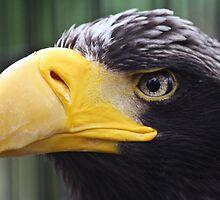 Eagle Eye by thomasash