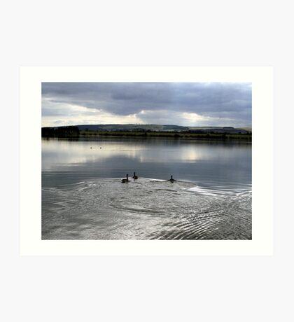 Ducks on the Loch Art Print