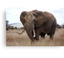 Loxodonta africana Canvas Print