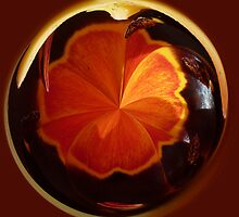 Tulip in spherical by Robert Gipson
