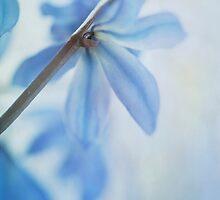 Blue by Priska Wettstein