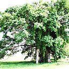 Round Tree by artFaggg