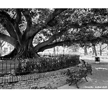 Buenos Aires - Plaza Vicente López Photographic Print