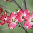 my red dogwood blossoms by ANNABEL   S. ALENTON