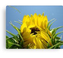 Floral art Sunflower Blue Sky Baslee Troutman Canvas Print