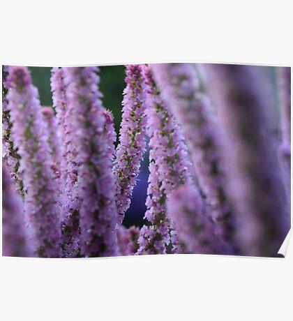 Flower Stalk Poster