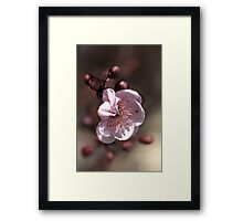 Soft as Blossom Framed Print