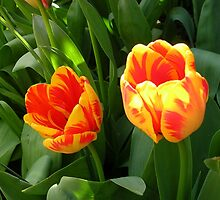 Tulip Twins by lezvee