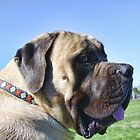 English Bull Mastiff by Christine &quot;Xine&quot; Segalas