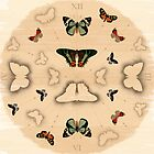 Butterfly Coordinates by petitestitches