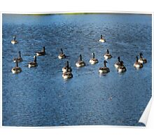 Wild Birds and Pond Poster