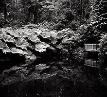 Kells Bay Gardens, County Kerry, Ireland by Gerard McGrath