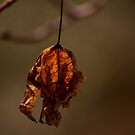 Hanging On! by Nathalie Chaput