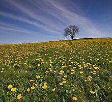 Dandelion Spring by Angie Latham