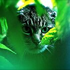 My   F   A   V   O   R   I   T   S  !   Warrior Cats Theme Songs  . by Brown Sugar . Tribute to Wild World - Cat Stevens . VIEWS (667). Featured . MYSTERIES OF THE PAST AND PRESENT . Thanks !!! by © Andrzej Goszcz,M.D. Ph.D