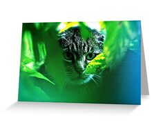 My   F   A   V   O   R   I   T   S  !   Warrior Cats Theme Songs  . by Brown Sugar . Tribute to Wild World - Cat Stevens . VIEWS (667). Featured . MYSTERIES OF THE PAST AND PRESENT . Thanks !!! Greeting Card