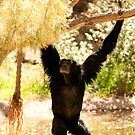Siamang by Misti Love