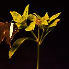 SWALLOWTAIL by Joe Powell