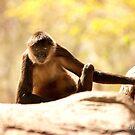 Spidee Monkey by Misti Love