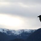 Raven About the Sunrise by Anthony Pipitone