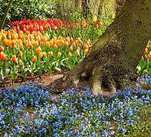 Woodland Planting of Spring Bulbs- Keukenhof Gardens by kkmarais