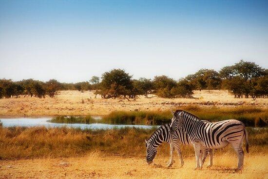 Do zebra dream? by Owed To Nature