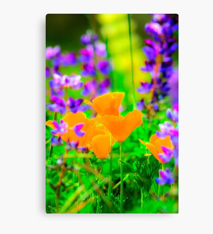 Annual gathering Canvas Print