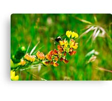 Drive by Spring Canvas Print
