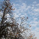 Cotton Above the Treetops by Anthony Pipitone
