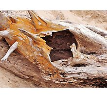 Orange Fungus Driftwood Photographic Print